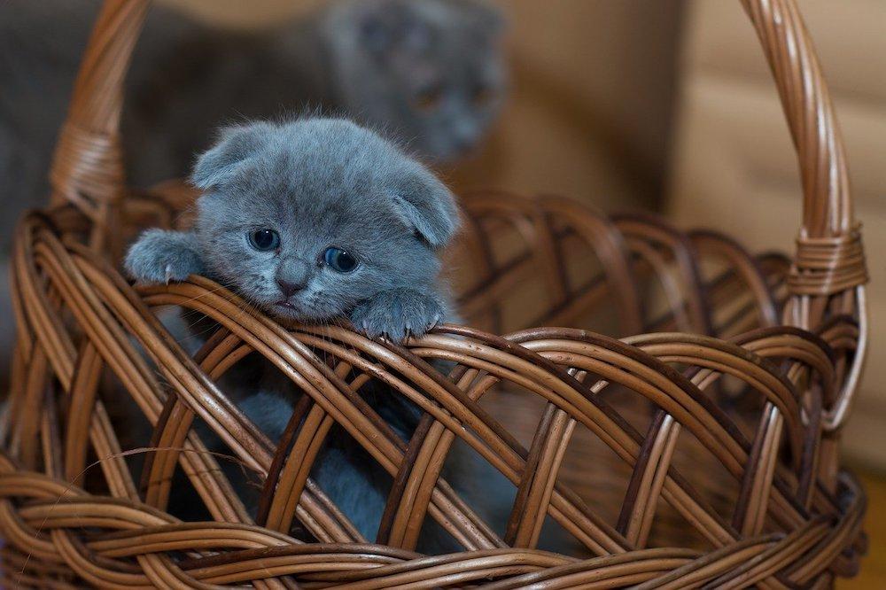 À quel âge un chat peut-il sortir ?
