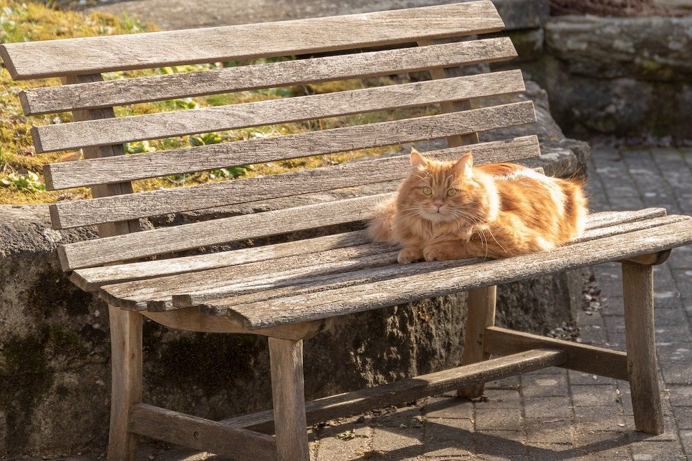 Aider un chat à supporter la chaleur